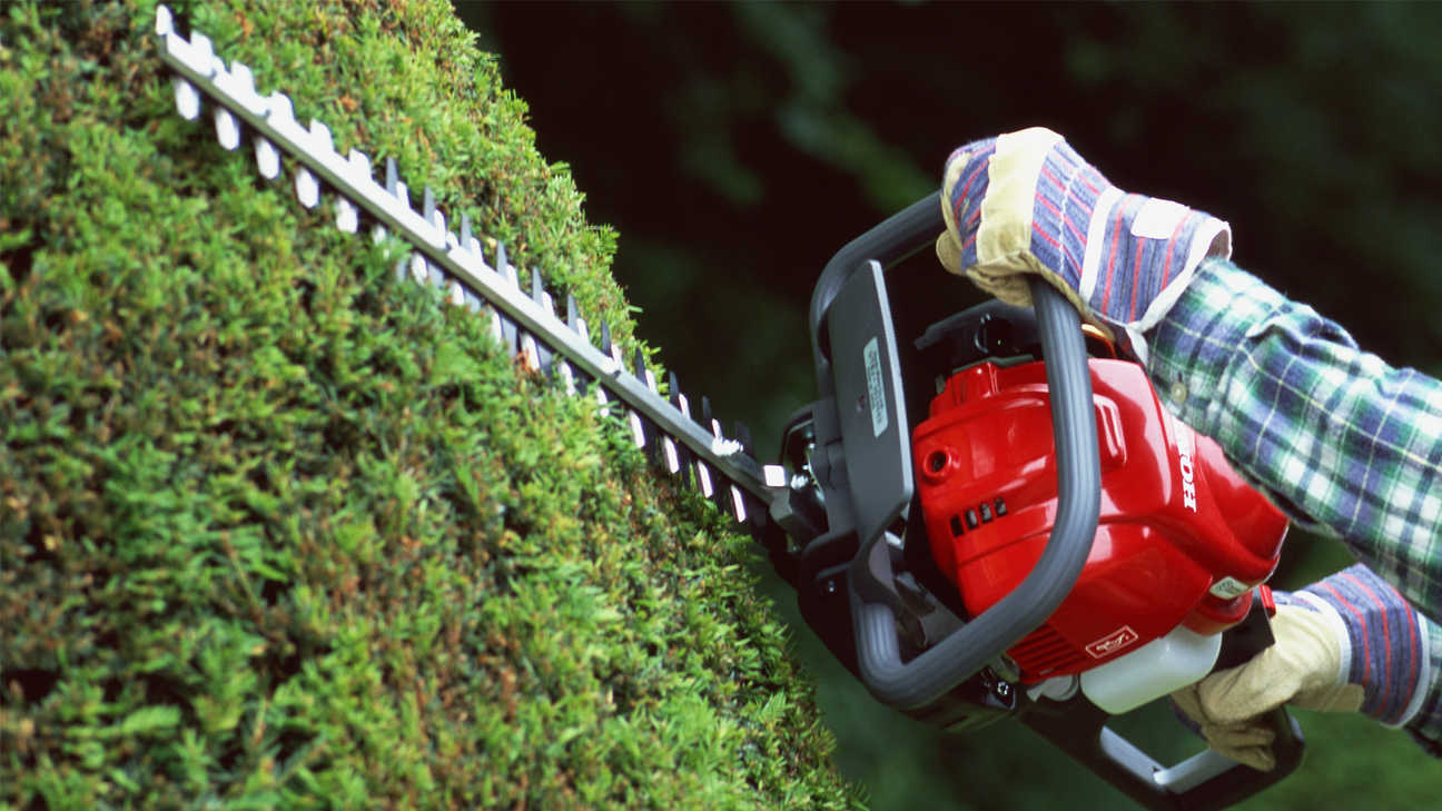 Honda Hedgetrimmers, close up in use, garden location.