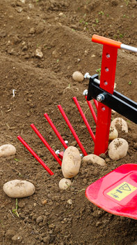 Close up of potato lifter, garden location.